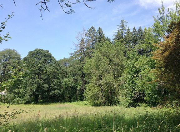 fir grove